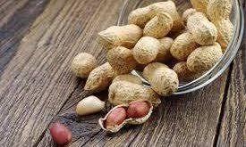 فروش بادام زمینی آستانه اشرفیه