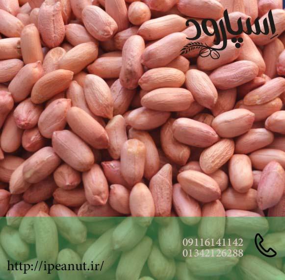 قیمت روز بادام زمینی
