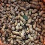 یذر بادام زمینی باکیفیت