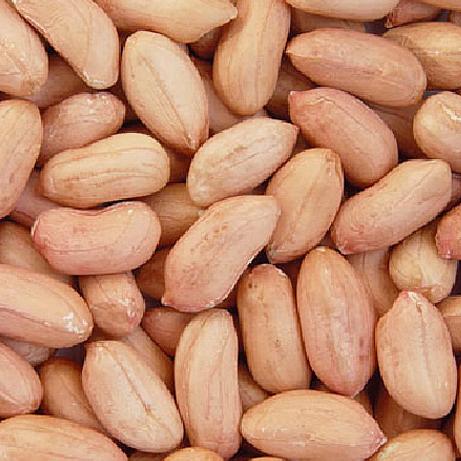 تولید بذر بادام زمینی