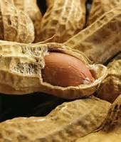 بذر بادام زمینی مرغوب