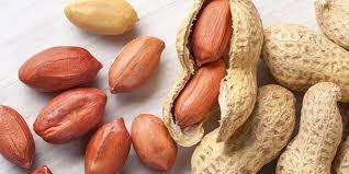 تهیه بذر بادام زمینی