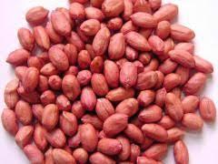 بذر بادام پارس آباد