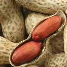 تهیه بذر بادام آستانه