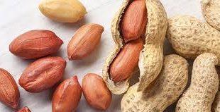 بذر بادام باکیفیت