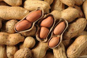 خرید بذر بادام زمینی
