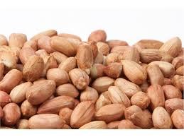 فروش بادام زمینی