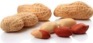 بازار خرید بذر بادام
