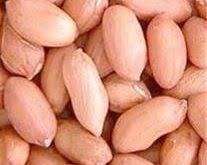 خرید بذر بادام اعلا