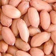 فروش بذر بادام شمال