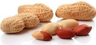 فروش بذر بادام