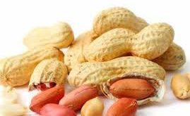خرید بذر بادام تضمینی