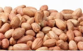 بذر بادام مناسب کشت