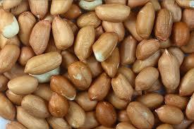 فروش بذر بادام مرغوب