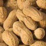 فروش بذر بادام کشور