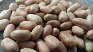 قیمت بذر بادام اعلا