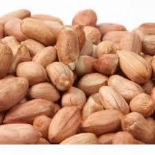 فروش بذر بادام مناسب