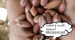 فروش بادام زمینی ریز