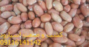 فروش ویژه بادام زمینی