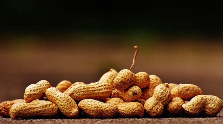 تولید کننده بادام زمینی