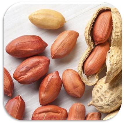 فروش بادام زمینی مخصوص کره گیری